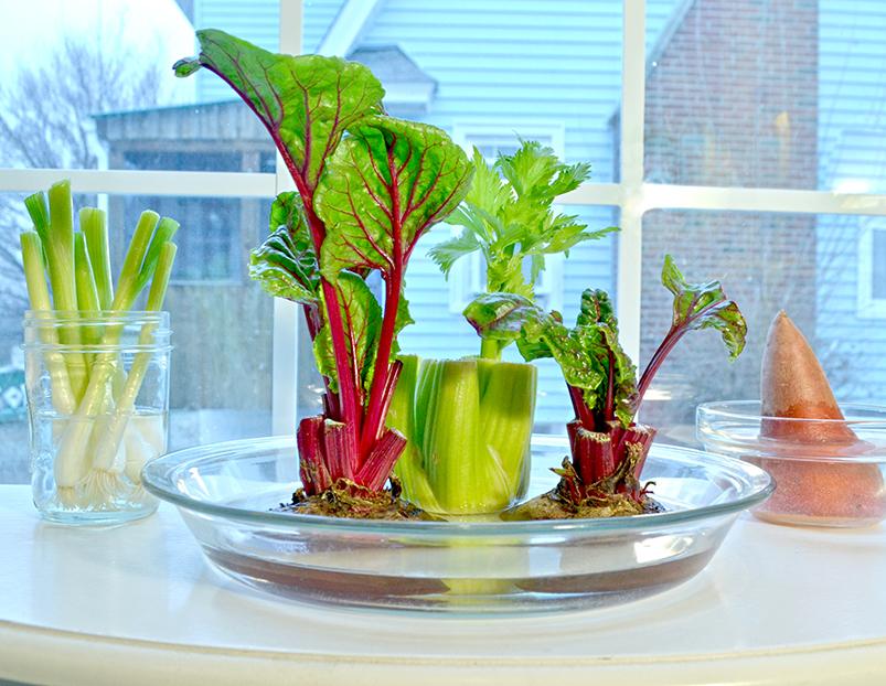 Show Kids: Grow Plants from Veggie Scraps Growing Vegetables From Scraps